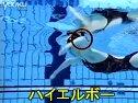 上海游泳老师 上海游泳培训 上海游泳教练 上海学游泳