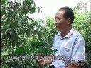 桃树夏季修剪技术视频