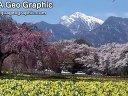 日本风光-真原的樱并木