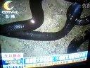 成都最大养蛇基地
