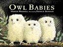 《小猫头鹰》英文绘本(Owl Babies)
