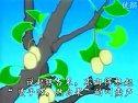 三棵银杏树视频