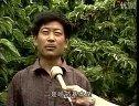 星火科技:大樱桃的种植技术和科学种枣视频