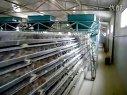 鹌鹑自动化养殖--济宁市恒久畜牧机械设备有限公司