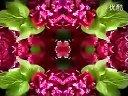 家庭如何种花和养花18-牡丹催花栽培技术