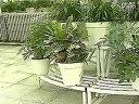 家庭如何种花和养花49-盆栽花卉的夏季管理视频