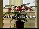 家庭如何种花和养花48-家庭养花的场所视频