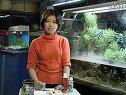 家庭养鱼必备常识-3如何管理水族箱(鱼缸)视频
