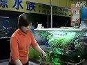 家庭养鱼必备常识-5如何种植水草视频