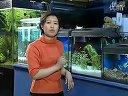 家庭养鱼必备常识-7如何保养水族箱视频