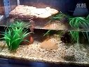 小水龟缸造景视频