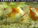 观赏鱼与观赏水草01 (243播放)