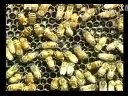 养蜂技术大全_最新蜜蜂养殖技术