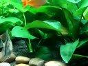 燕鱼混养视频