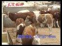 正规养牛场-山东天宏牧业视频