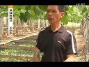 致富经黄鳝养殖视频465989748