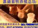 养牛技术农广天地新型养兔