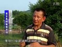 嘉宝果、树葡萄、嘉宝果苗、树葡萄苗、台湾嘉宝果、台湾树葡萄、嘉宝果种植技术、树葡萄种植技术视频