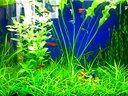水族箱水草造景-简单视频