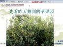 果农乐第166期桃树秋季怎么修剪视频
