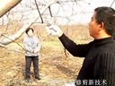 桃树修剪。王宝举18615393572视频