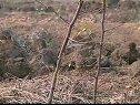 枣树的冬季整形修剪技术视频