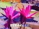 佛教音乐佛教歌曲120首,多听受益 客路兴哥