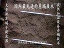 中国最先进的蝎子养殖技术-蝎子养殖最新技术