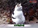2013年1月份中国微逗奇葩悲剧傻缺视频合辑