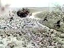 【国产老电影】【1959 战上海】【怀旧音乐群72723035】