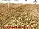 火龙果种植技术9视频