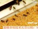 03_春季蜜蜂养殖_农业蜜蜂养殖_养殖蜜蜂_视频