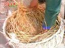 养鹅技术鸽子养殖(加2820054988)(鹅的饲养管理)视频