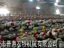 养鸡设备视频大型养鸡场视频