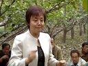 梨树高产栽培技术视频