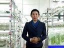 蓝莓种植技术--王美舒视频