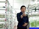 蓝莓组培技术--王美舒官网:huisenlanmei视频