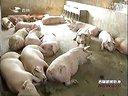 四轮驱动促进吉林畜禽养殖业发展创业