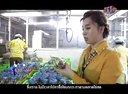 泰国企业-企业成功奥秘-泰国鹌鹑鸟养殖场