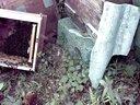 蜜蜂饲养(中华蜜蜂、中蜂、土蜂)视频