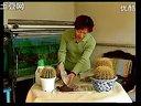 家庭如何种花和养花11-盆栽仙人掌和仙人球视频