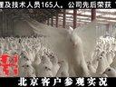 鸽子养殖肉鸽养殖,河北客户参观,天成鸽业二?一三年二月视频