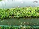 23_干煸泥鳅-东北养泥鳅