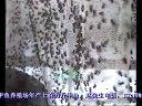 甲鱼饲料_蛆养殖技术视频