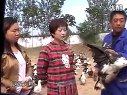 火鸭火了刘芳艳的创业路视频