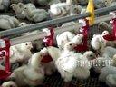 养鸡设备厂家、养鸡设备批发、机械有限公司