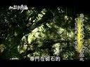 台湾性感美腿丝+袜美女热舞诱惑dj