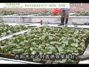 蚯蚓188金宝博官方直营网,大棚养殖泥鳅