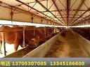 肉牛养殖技术,秸秆养牛技术,养牛,正规化肉牛养殖场视频