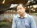 乡村四季林蛙庭院养殖视频
